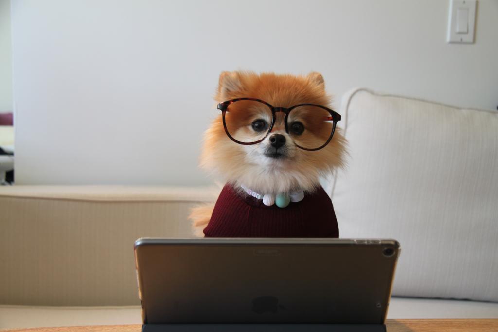 Hund mit Brille vor einem Laptop.
